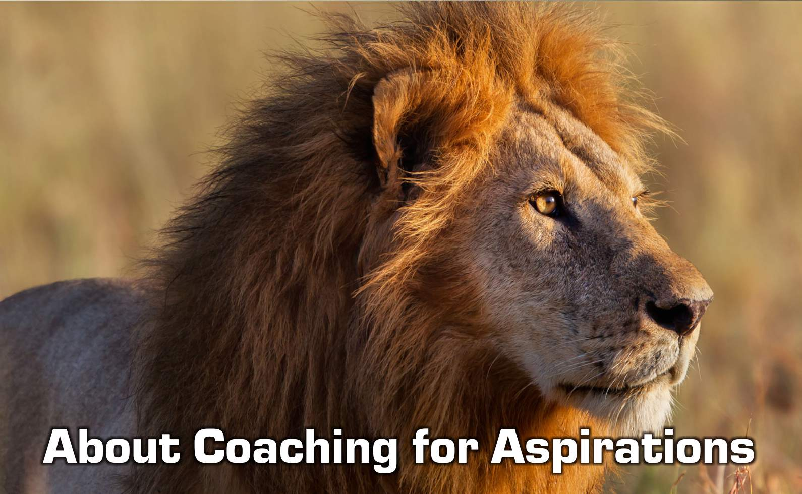 About Coaching for Aspirations